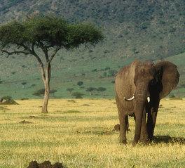 visa info Kenia berge und meer