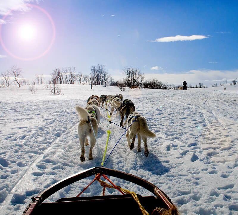 norwegen hundeschlitten berge und meer