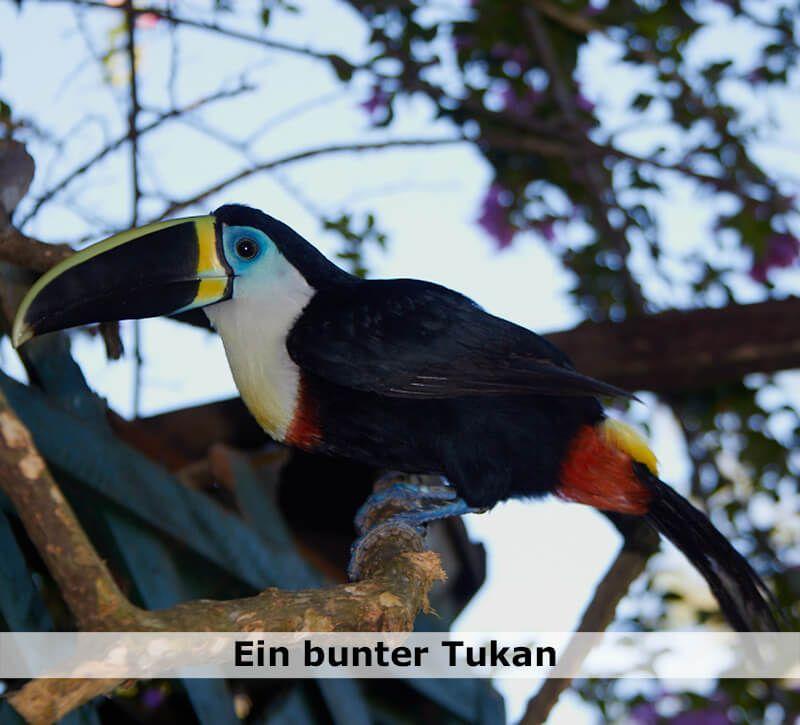 kolumbien kolumbien tukan berge und meer