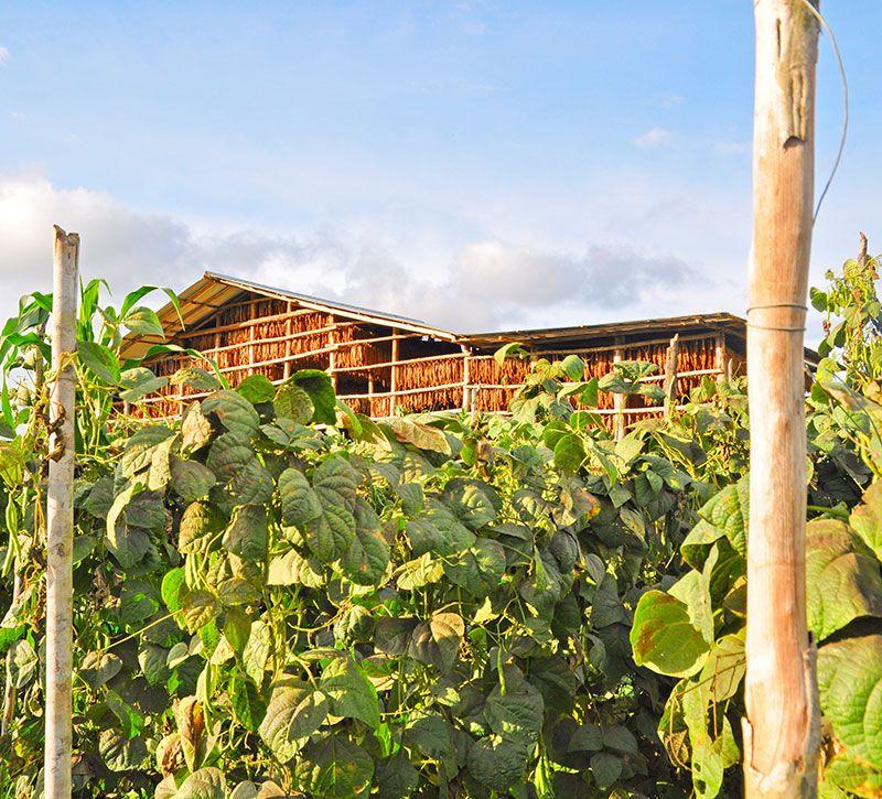 kolumbien das kaffeedreieck berge und meer