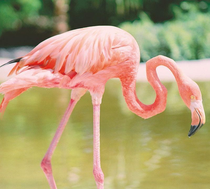 dominikanische republik flamingo berge und meer
