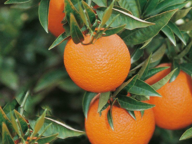 tunesien orangen berge und meer