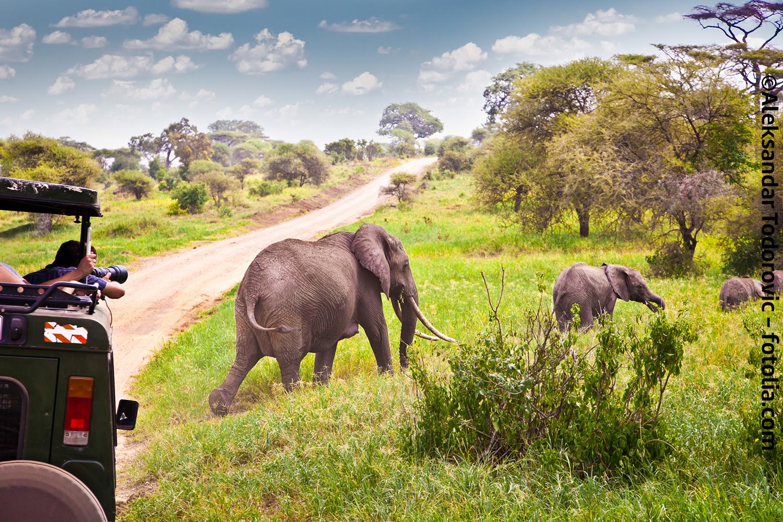 safari gesperrt