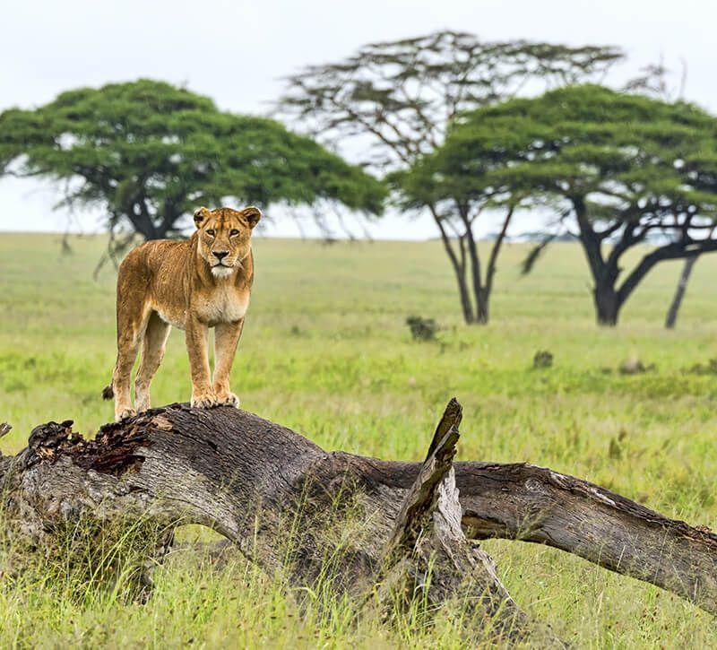 tansania  berge und meer