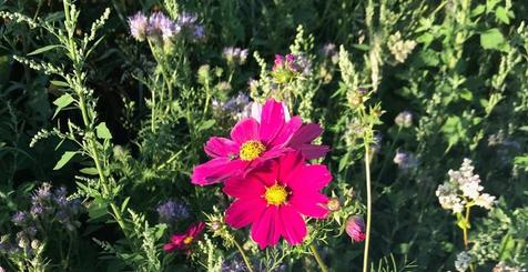 Blumenwiese für Bienen am Dortmund Airport