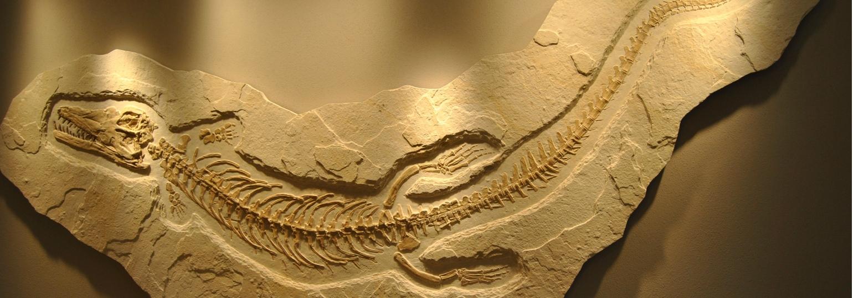 Dino Fossil-Nachbildung aus Kalk