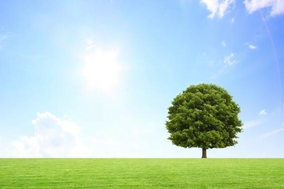 Baum steht auf grüner Wiese bei sonnigem Wetter