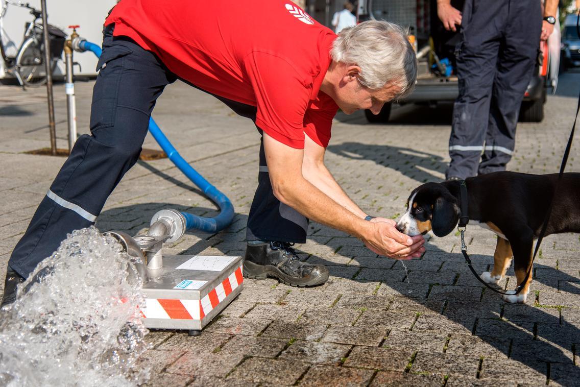 Mitarbeiter gibt einem Hund Wasser zum Trinken