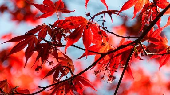 Quartalsangebot Herbst im Spa & Beauty