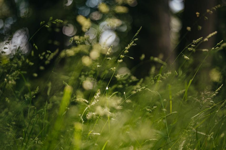 Gräser im Wald