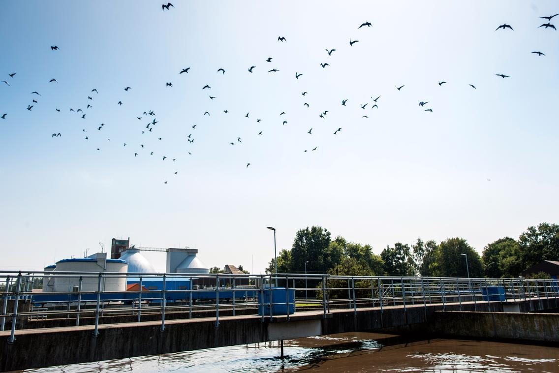 Vögel überfliegen das Nachklärbecken des Klärwerks in Eversburg